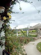 第三セクタの薔薇園