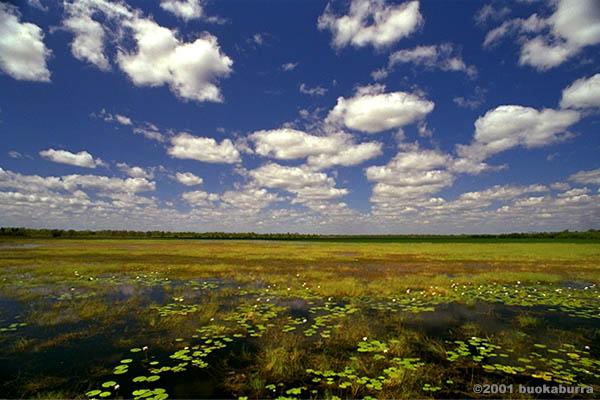 カカドゥ国立公園の画像 p1_16