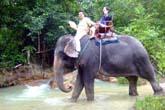 象で渡河:クリックで拡大