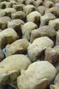 象の大群:クリックで拡大
