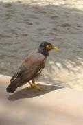 可愛らしい小鳥:クリックで拡大