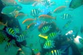 魚群に囲まれる:クリックで拡大