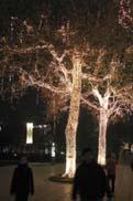 ライトアップされた木々:クリックで拡大