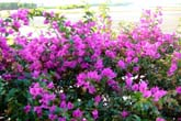 NCの花たち