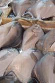 銅川水産市場