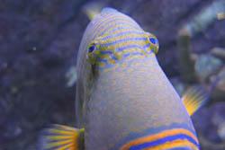 まぬけ魚(仮称):クリックで拡大
